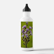 Alpine sow thistle (Ci Water Bottle