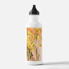 Albuca flowers (Albuca Water Bottle