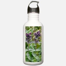 Alpine bartsia (Bartsi Water Bottle