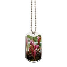 American pitcher plant Dog Tags