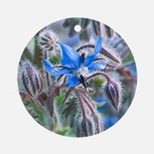 Borage (Borago officinalis) Round Ornament