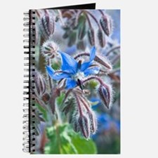 Borage (Borago officinalis) Journal