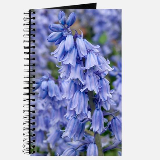 Bluebells (Hyacinthoides hispanica) Journal