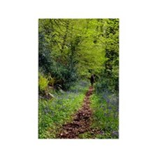 Bluebell wood Rectangle Magnet