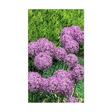Allium flower Decal