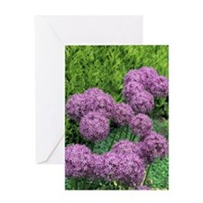 Allium flower Greeting Card
