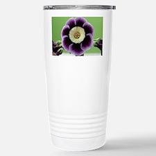Alpine auricula 'Elizabeth Anne Travel Mug