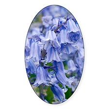 Bluebells (Hyacinthoides hispanica) Decal