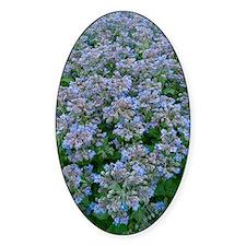 Borage (Borago officinalis) Decal