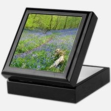 Bluebells (Hyacinthoides sp.) Keepsake Box