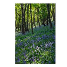 Bluebell wood Postcards (Package of 8)