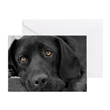 Beautiful Black Labrador Greeting Card