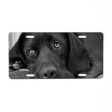 Beautiful Black Labrador Aluminum License Plate