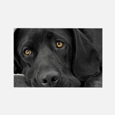 Beautiful Black Labrador Rectangle Magnet