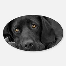 Beautiful Black Labrador Decal