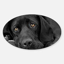 Beautiful Black Labrador Decal