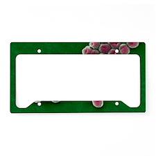 Acinetobacter baumannii bacte License Plate Holder