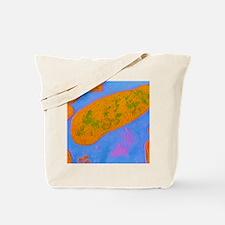 Acinetobacter sp. bacteria Tote Bag
