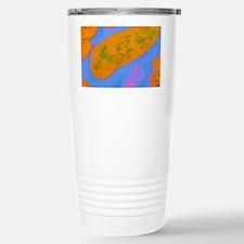 Acinetobacter sp. bacteria Travel Mug