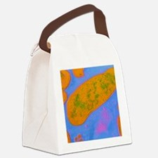 Acinetobacter sp. bacteria Canvas Lunch Bag