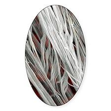 Asbestos fibres, SEM Decal