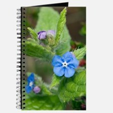 Alkanet (Pentaglottis sempervirens) Journal