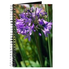 African blue lily 'Bressingham Blue' Journal