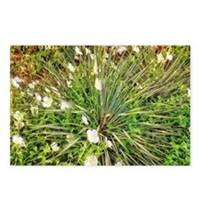 Agave with White Flowers Postcards (Package of 8)