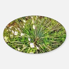 Agave with White Flowers Decal