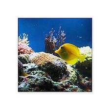 "Yellow fish Square Sticker 3"" x 3"""