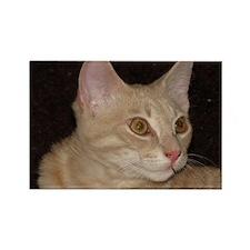Goldeneyed cat Rectangle Magnet