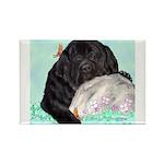 Sleepy Newfoundland Puppy Rectangle Magnet (10 pac