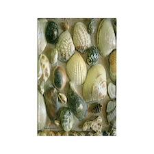 Vintage Shell Art Flip Flops Rectangle Magnet
