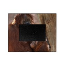(19) Orang Mother and Child 7374 Picture Frame