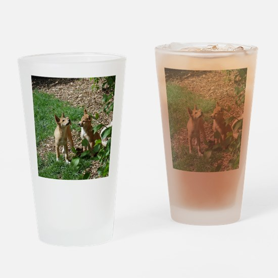dingo puppies Drinking Glass
