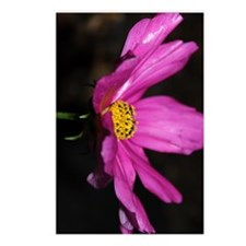 Pink Daisy Postcards (Package of 8)