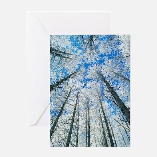 Snow covered aspen (Populus tremula) Greeting Card