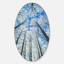 Snow covered aspen (Populus tremula Sticker (Oval)