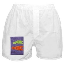 Zuni Maidens Boxer Shorts