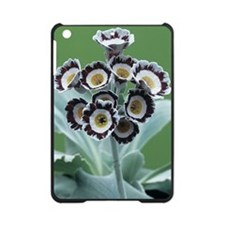 Show auricula 'Star Wars No. 1' flo iPad Mini Case