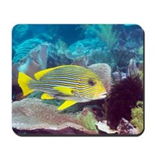 Yellow-ribbon sweetlips Mousepad