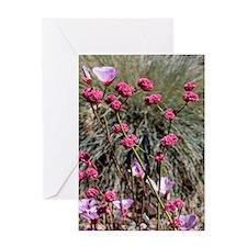 Eriogonum grande rubescens Greeting Card
