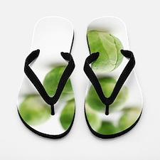 Brussels sprouts Flip Flops