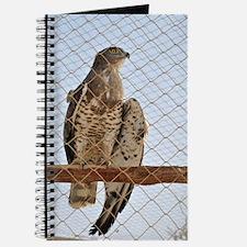 Wounded Goshawk, Accipiter gentilis Journal