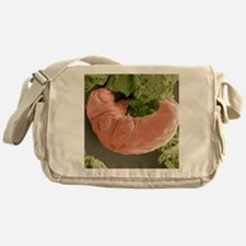 Water bear, SEM Messenger Bag