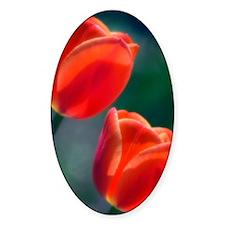 Tulips (Tulipa hybrid) Decal