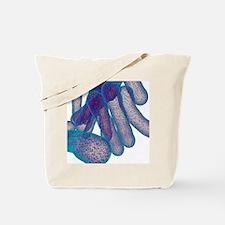 Tuberculosis bacteria, artwork Tote Bag