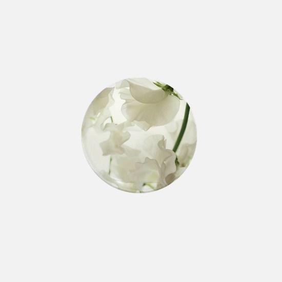 Sweet pea (Lathyrus odoratus) Mini Button