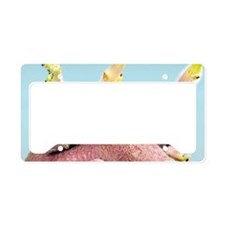 Sprouting potato License Plate Holder