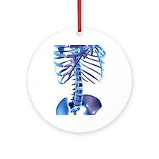 Spine, computer artwork Round Ornament